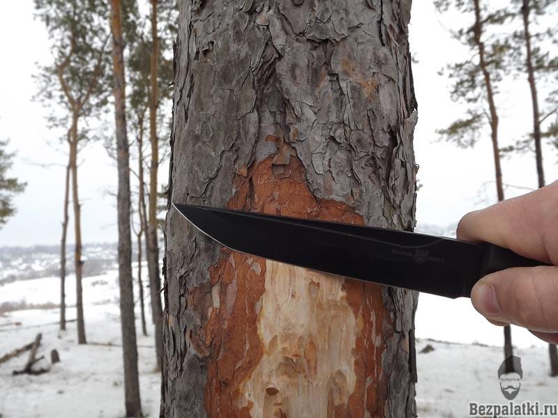 древесная заболонь заготовка