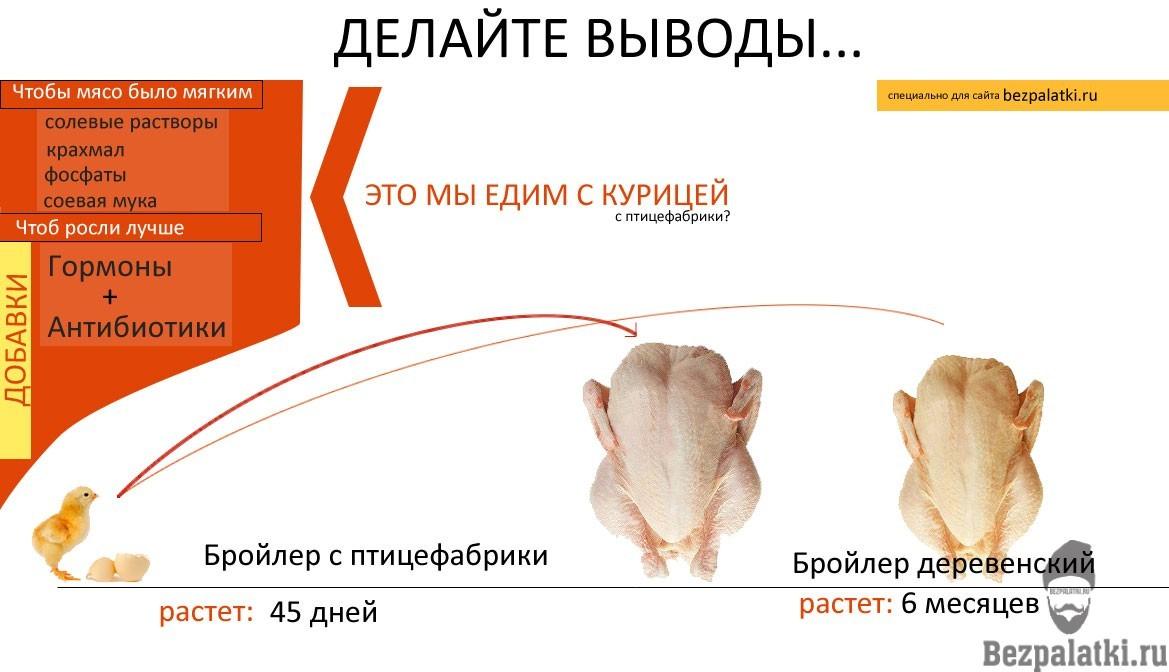 инфографика-курица