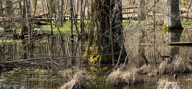 Болота. Преодоление болот. Техника безопасности