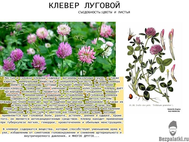 КЛЕВЕРЪ