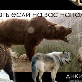 Что делать при встрече с диким зверем в лесу?