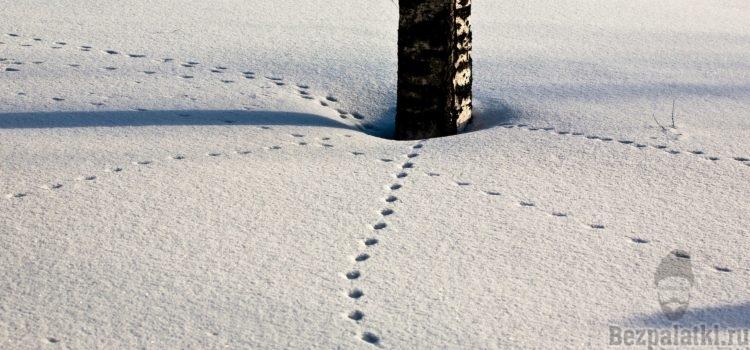 Следы животных на снегу и их основные признаки