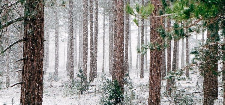 Как зимой переночевать в лесу