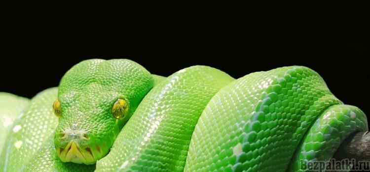 Как сделать ловушку змей: научиться ловить змею